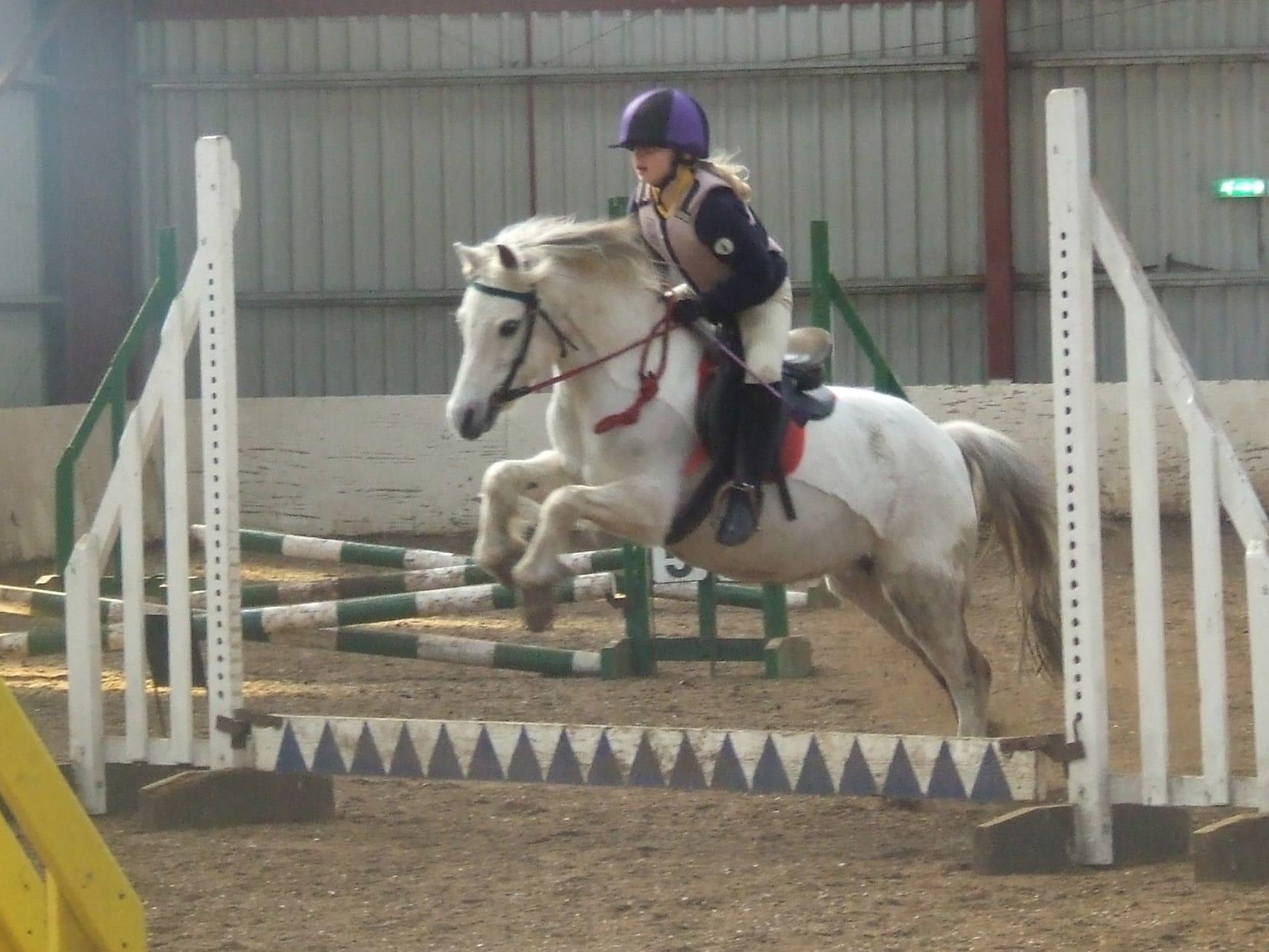 Horses Talygarn Equestrian Centre